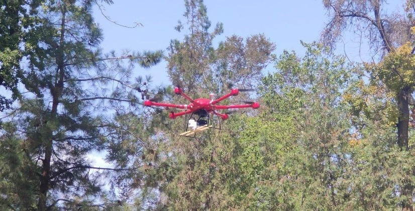 «Дўстлик боғи»даги зарарланган дарахтлар дрон ёрдамида «даволанмоқда» (фото)
