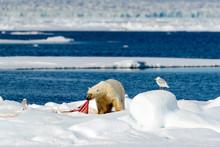 Арктикада бир асрлик қаҳва топилди