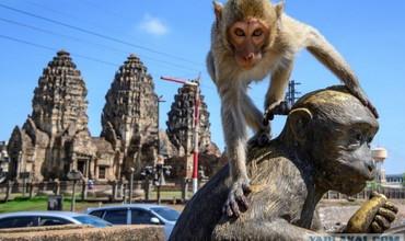 Таиландда минглаб оч маймунлар одамларга ҳужум қилмоқда