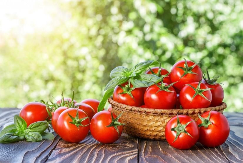 Росселхознадзор яна Ўзбекистондан олиб келинган помидорларда вирус аниқлади