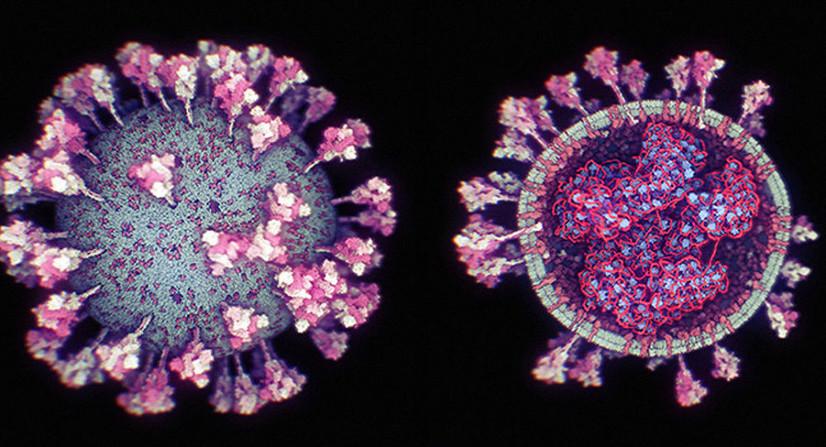 Коронавируснинг энг аниқ 3D-модели ишлаб чиқилди