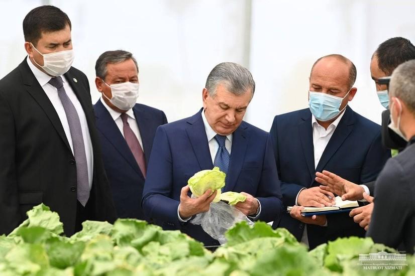 Президент Пахтаобод туманидаги инновацион иссиқхонани бориб кўрди